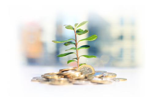 Tree Growing From Coins Image